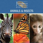 Animals & Insects: Part 1 of 4