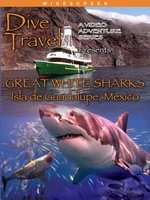 Great White Sharks Isla De Guadalupe, Mexico