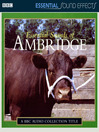 Essential Sound Effects of Ambridge (MP3)