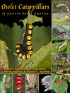 Owlet Caterpillars of Eastern North America (eBook)