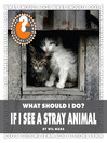 What Should I Do? If I See a Stray Animal (eBook)