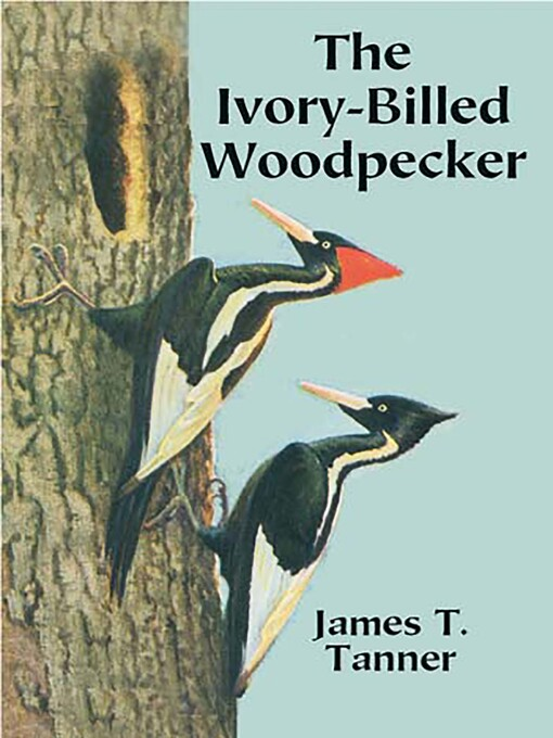 The Ivory-Billed Woodpecker (eBook)
