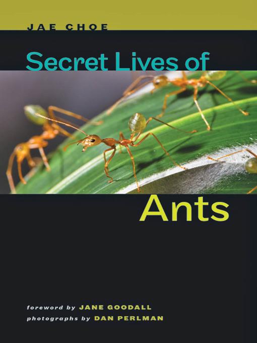 Secret Lives of Ants (eBook)