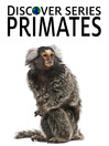 Primates (eBook): Chimpanzees, Gorillas and other Apes and Monkeys