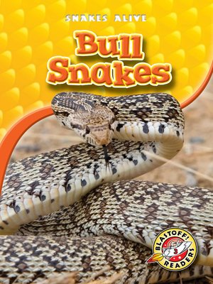 Click this cover for a(n) eBook sample of Bull Snakes